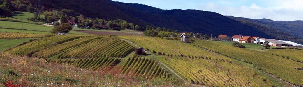 Vignobles de Corbonod